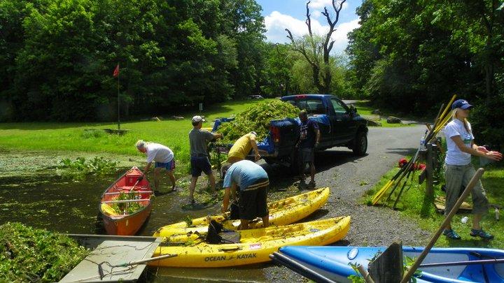volunteers removing invasive species