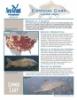 Common Carp Fact Sheet