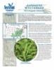 Japanese Stiltgrass Fact Sheet 2018