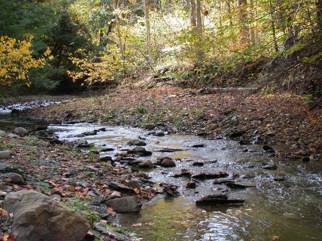 PA stream with fall foliage