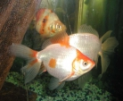 Prevention tips for aquarium owners