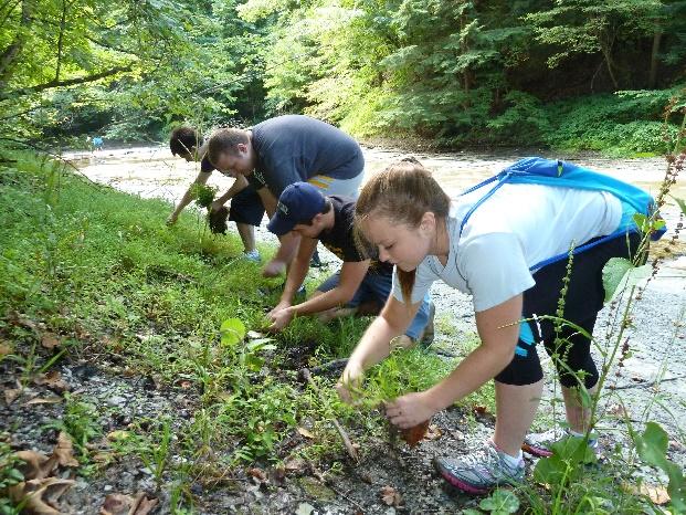 students pulling invasive plants
