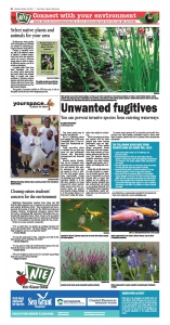 NIE page Unwanted fugitives