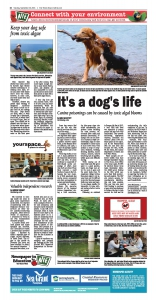 NIE-It's a dog's life- Canine poisonings can be caused by toxic algal blooms