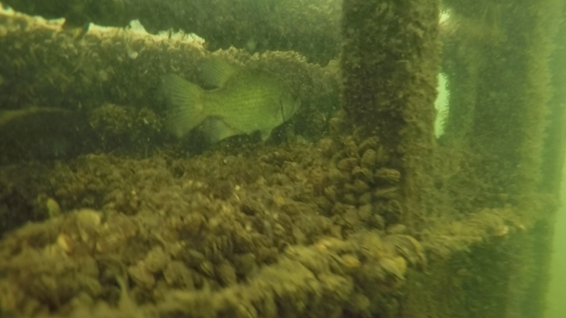 Underwater fish habitat structure - photo includes link to underwater video