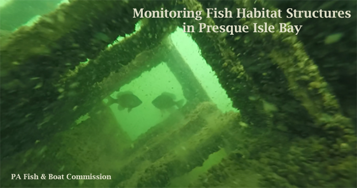 Fish habitat survey underwater photo