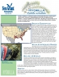 Hydrilla Fact Sheet