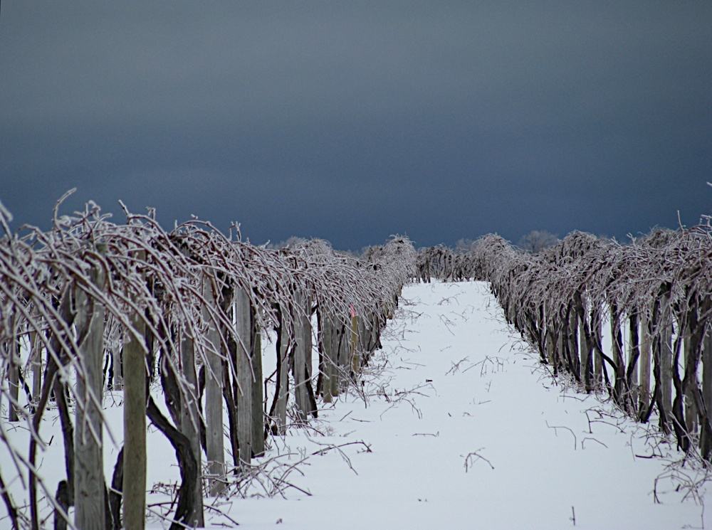 Erie crops in the winter