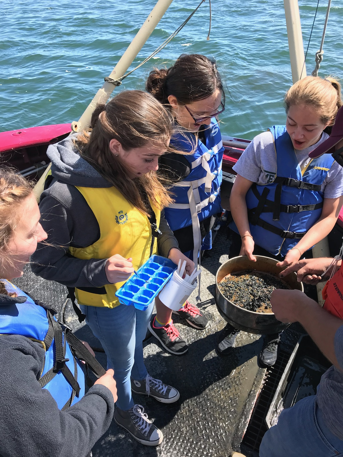 students looking through Lake Erie sediment for macroinvertebrates