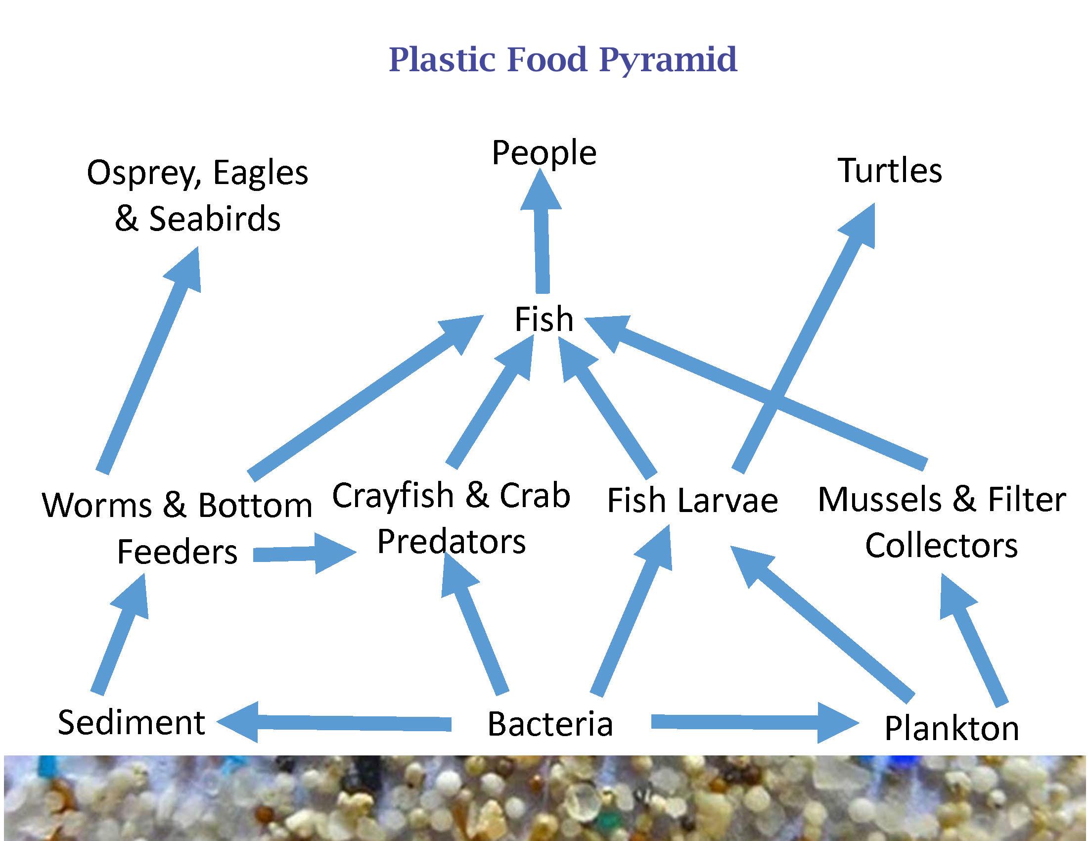 plastic food pyramid