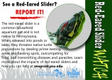 Red-eared slider postcard
