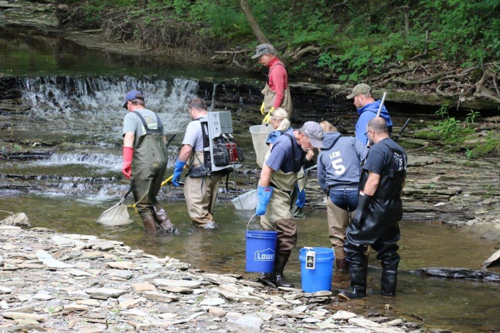 Sevenmile creek electrofishing