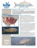Common Carp Fact Sheet