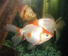 Prevention tips for aquarium owners